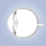 אנטומיה של העין לסטודנטים לרפואה: חלק א' (מבוא: מבנה העין)