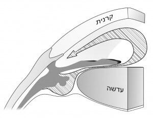 זרימת הנוזל התקינה בתוך העין