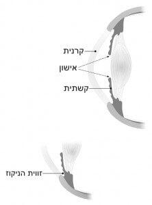 מבנה החלק הקדמי של העין